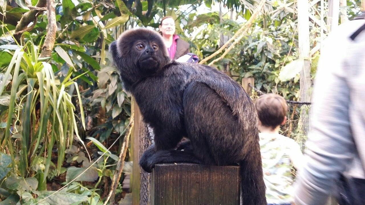 årskort til dyreparker