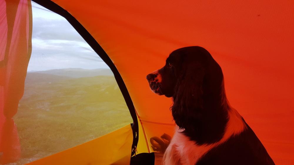 Utsikt fra telt.jpg