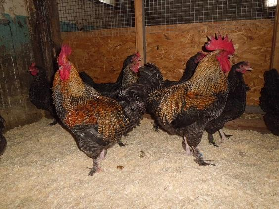 Maran,haner,aug16,1..jpg