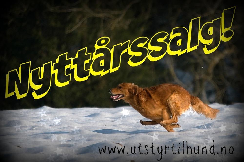 hunting-dog-1212398_1280-2.jpg