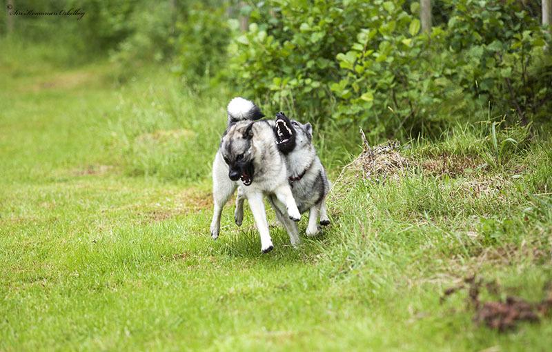Hundepark Mini_4232.jpg