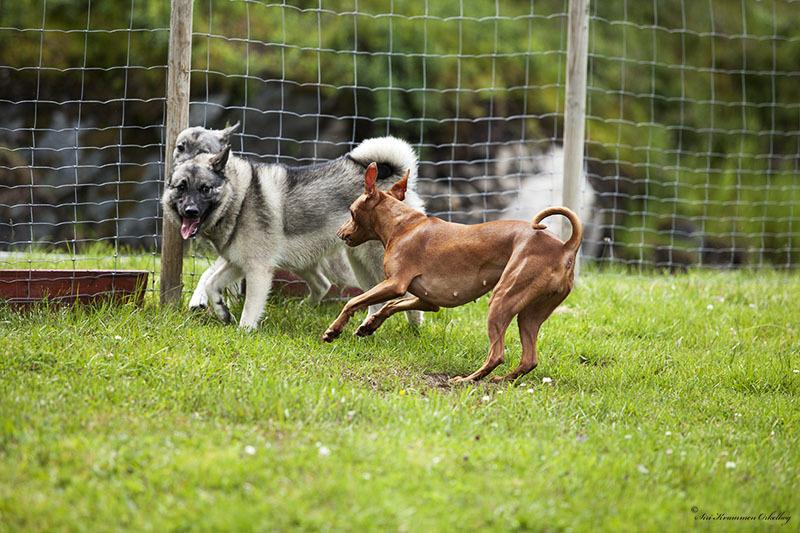 Hundepark Mini_4245.jpg