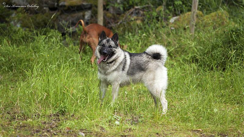 Hundepark Mini_4249.jpg