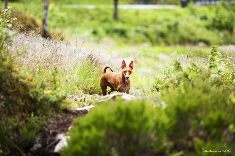 Hundepark Mini_4251.jpg