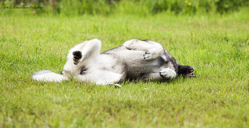 Hundepark Mini_4268.jpg
