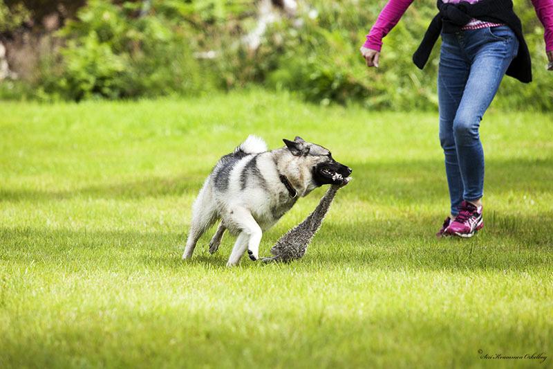Hundepark Mini_4284.jpg
