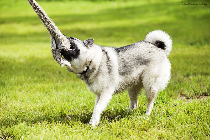 Hundepark Mini_4288.jpg