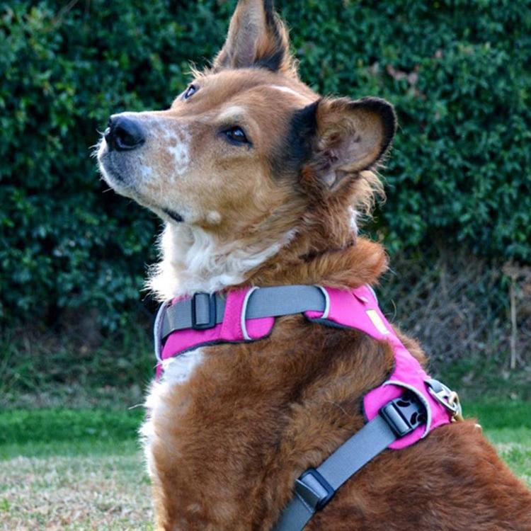 ruffwear-front-range-harness-alpine-pink-2.thumb.jpg.3439a33b3376b2887d3423796769a3a9.jpg