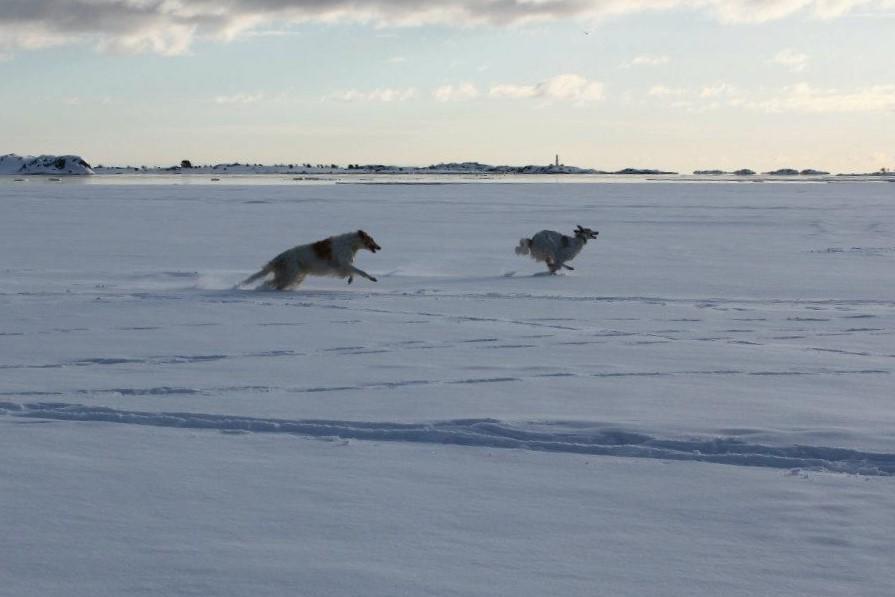 walter og ataham på isen.jpg